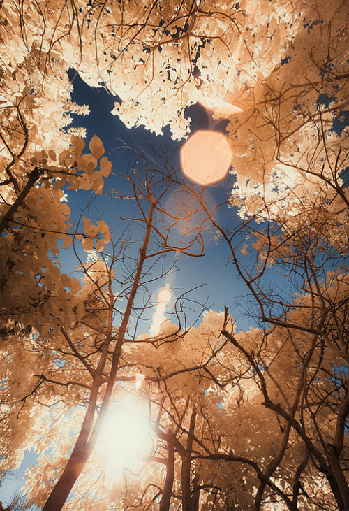 14-lovely-tree-infrared-photography