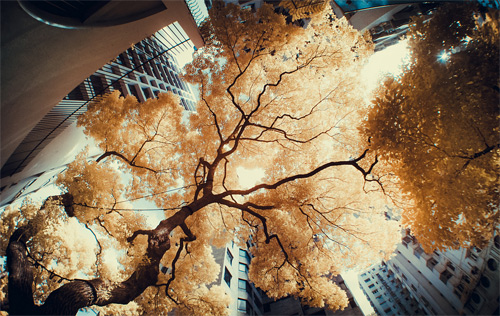 3-tree-leaves-infrared-photography