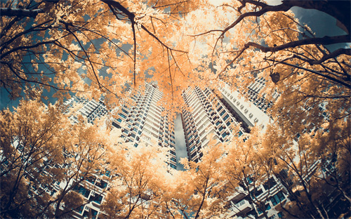 4-tree-building-infrared-photography