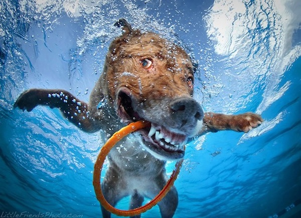 sethcasteelunderwaterdogs3-1