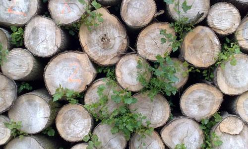 11-eleven-Wood-Log