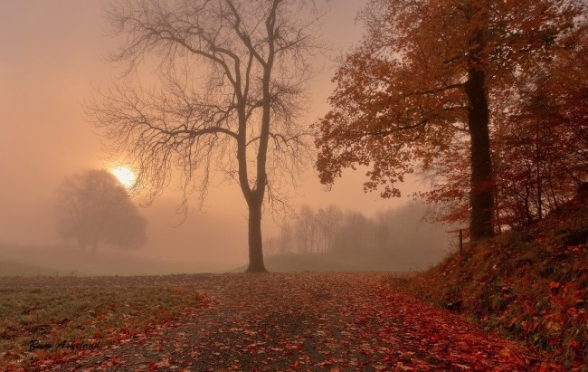 autumn-foggy-sunset-650x411