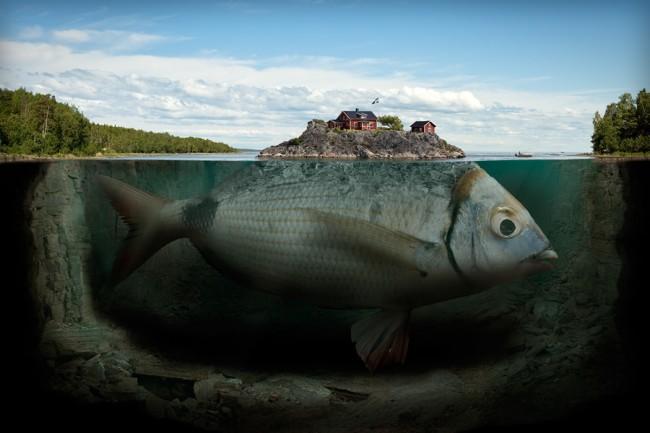 erik-johansson-fisk-650x433
