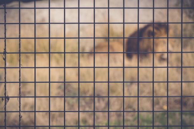 vincennes-zoo-paris-ouverture-reouverture-grillage-fence-adrien-thibault-photographe-pentax-k3-3-650x433